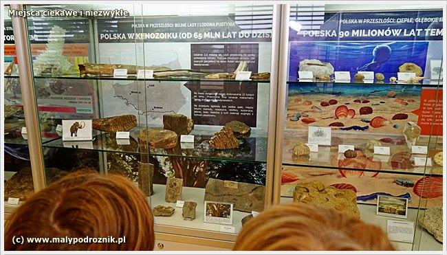 Pracownia Muzeum Ziemi UAM