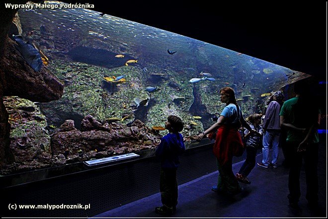 Istanbul, Stanbuł, Aquarium